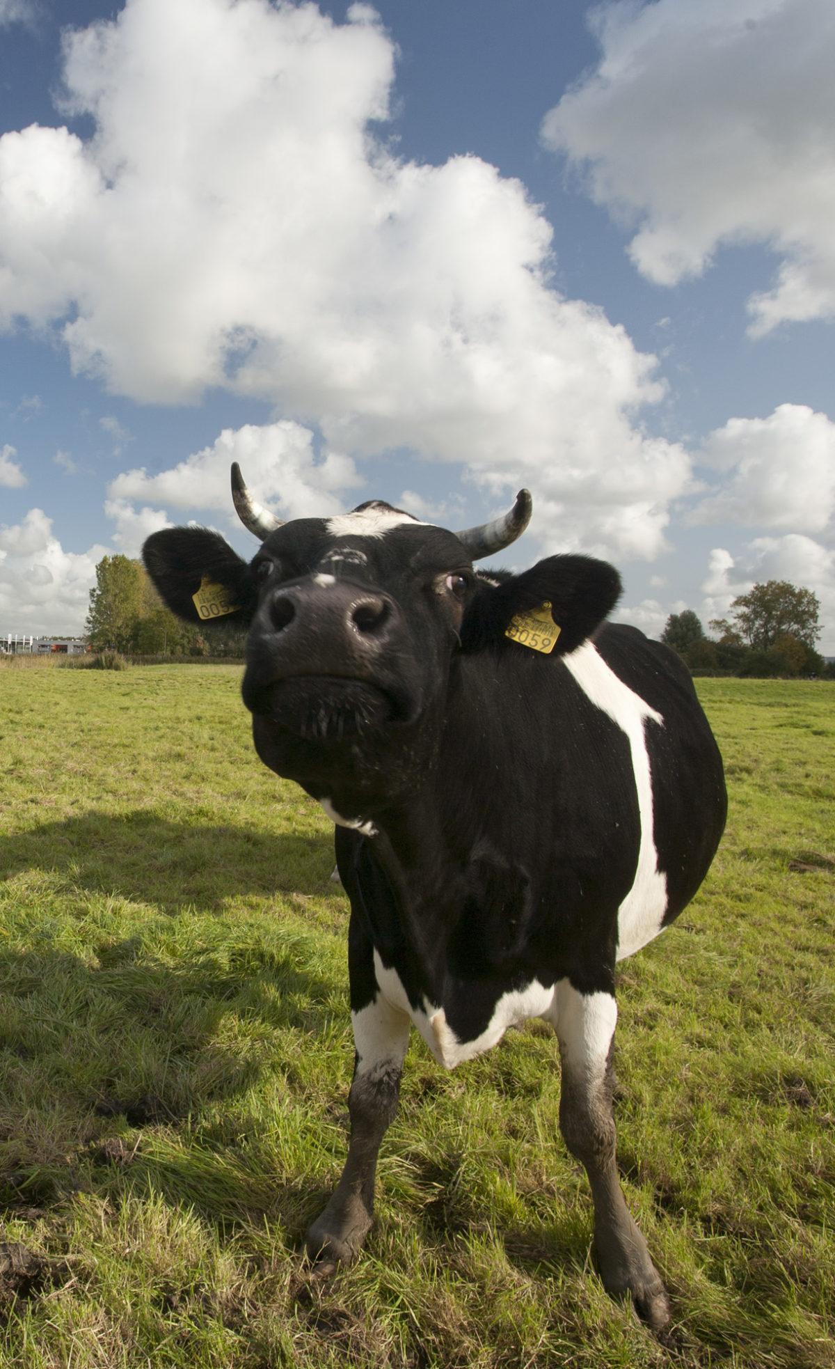 Provincie Drenthe steunt natuurinclusieve landbouw