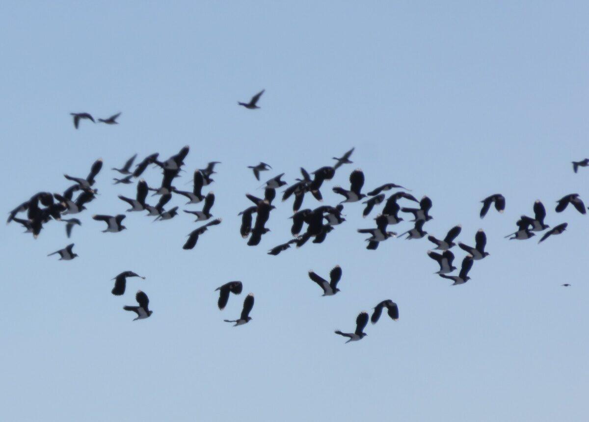Nog meer actie nodig voor boerenlandvogels