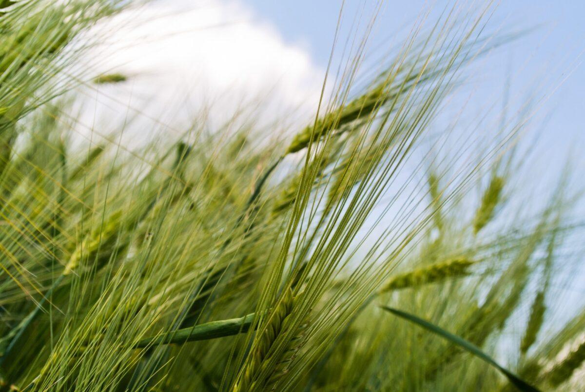 Wat betekent 'biobased' voor een circulair Drenthe?