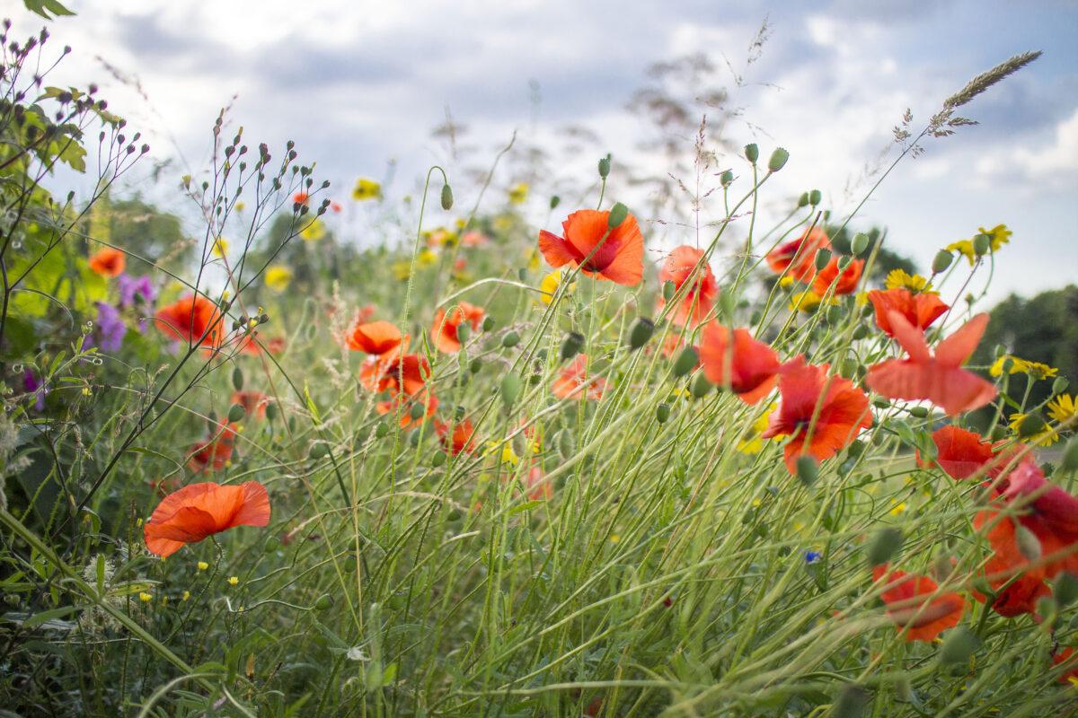 Campagne 'Maak Grijs Groener' brengt begrip biodiversiteit tot leven