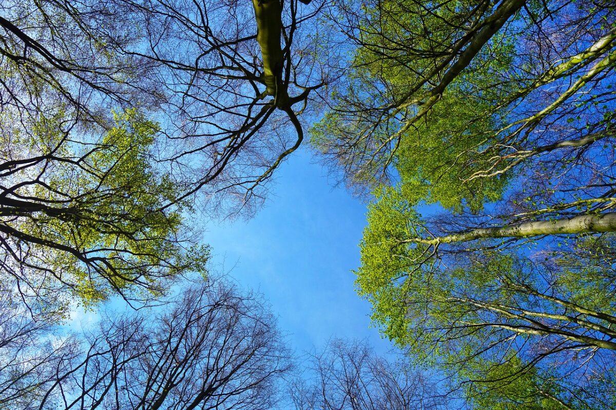 Plan Boom: 10 miljoen bomen door en voor burgers