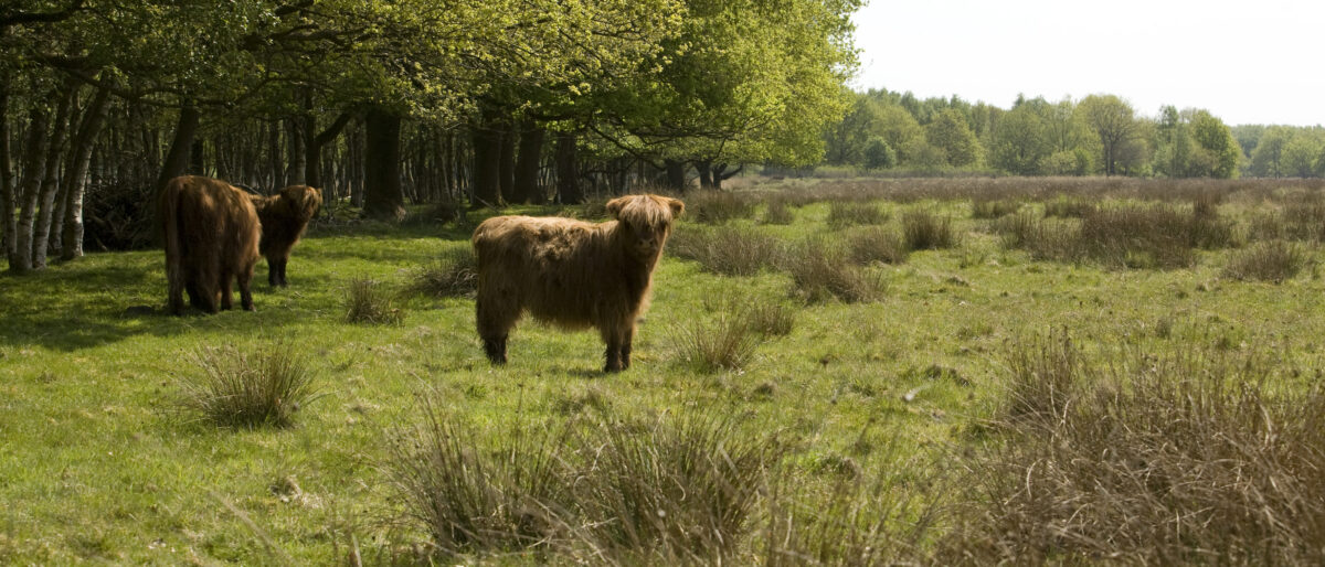 Plan van aanpak gezamenlijke natuur- en milieuorganisaties: Benut stikstofcrisis als kans voor natuur en álle Nederlanders