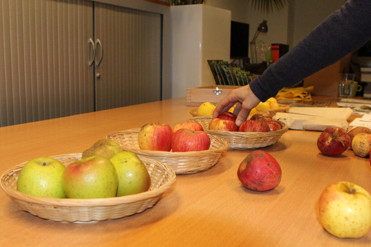 Fruitbomen enten: Werkplaats Voedselbossen Noord-Nederland krijgt uitleg