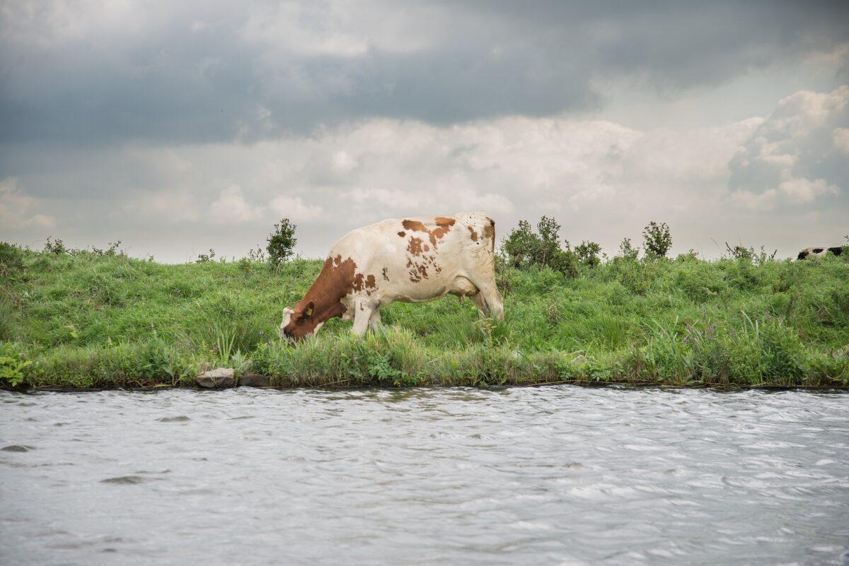Natuur en Milieufederaties bezorgd over spoedwet stikstof