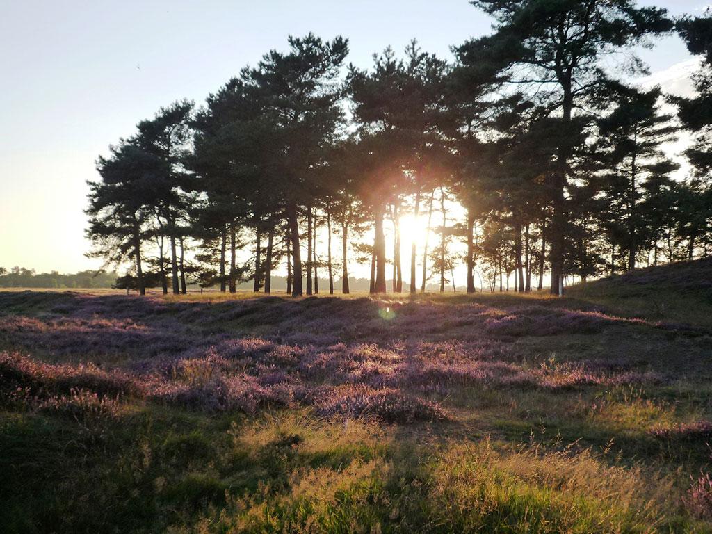 Denk mee over de Green Recovery van Drenthe: hoe komen we duurzaam uit de coronacrisis?
