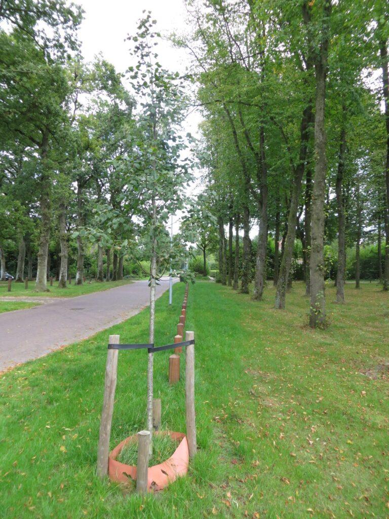 Aanplant en herstel van de brinkbeplanting in de omgeving Noord-Peest.