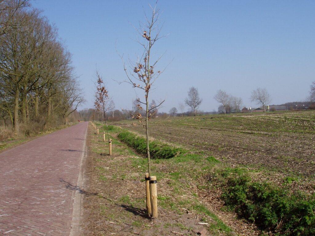 Aanplant-herplant van een bomenrij Diepstroeten Assen
