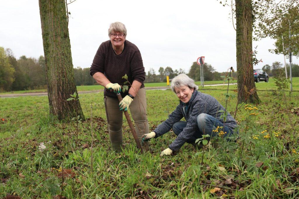 Bij-vriendelijke bomen en struiken worden door het Wijkplatform aangeplant in het Ringpark van Meppel.