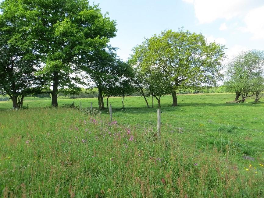Bomen hebben een belangrijke ecologische waarde en bieden beschutting voor vee.