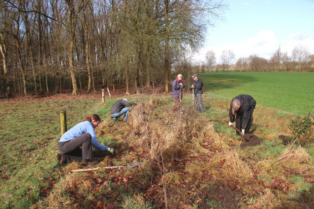 De Landschapsbrigade Meppel herstelt door de aanplant van bomen en struiken een singel in het gebied Broekhuizen.