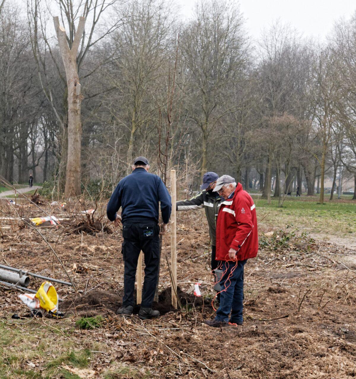 Bewonersgroep plant lindebomen in Zuiderpark Hoogeveen