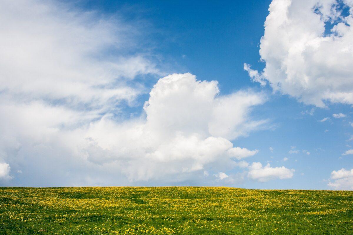 """Natuur en Milieufederaties ondersteunen petitie Longfonds: """"Stel een speciale gezant aan voor gezonde lucht"""""""
