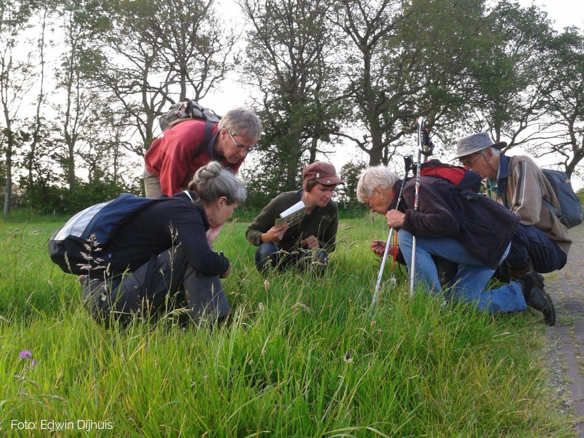 Bermscouts: NMFD biedt ondersteuning bij ecologisch beheer bermen